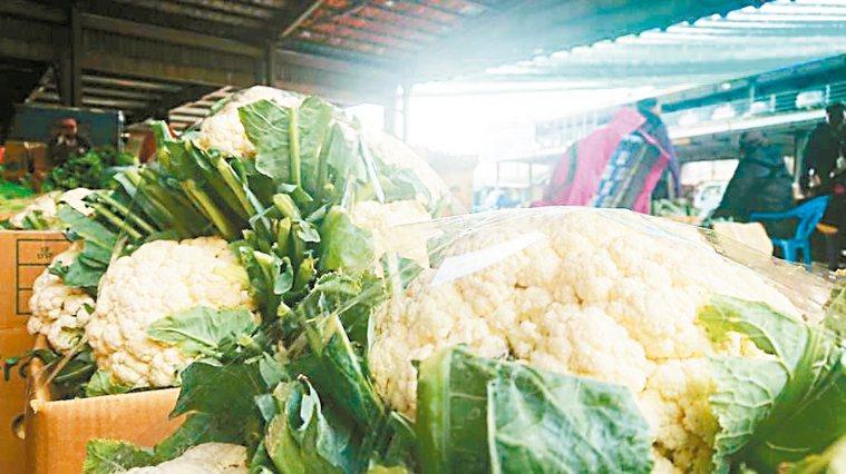 內行網友分享不少花椰菜心的簡單料理。聯合報系資料照/記者簡慧珍攝影