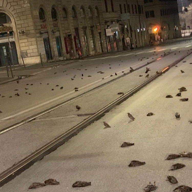 日前義大利羅馬在新年煙火晚會後,街道上竟出現數百隻鳥暴斃死亡的恐怖景象。圖擷自euronews