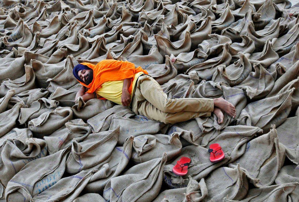 在印度的一個穀物批發市場上,一位農民躺在裝滿稻穀的麻袋上。  圖/路透社