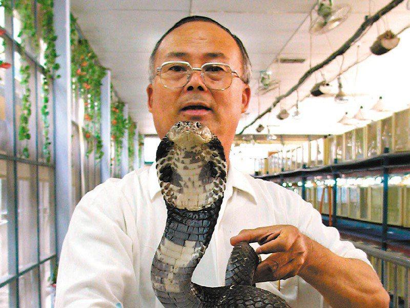 黃國男隨手把玩大眼鏡蛇,看似輕鬆,其實已被咬過多次。圖/聯合報系資料照片