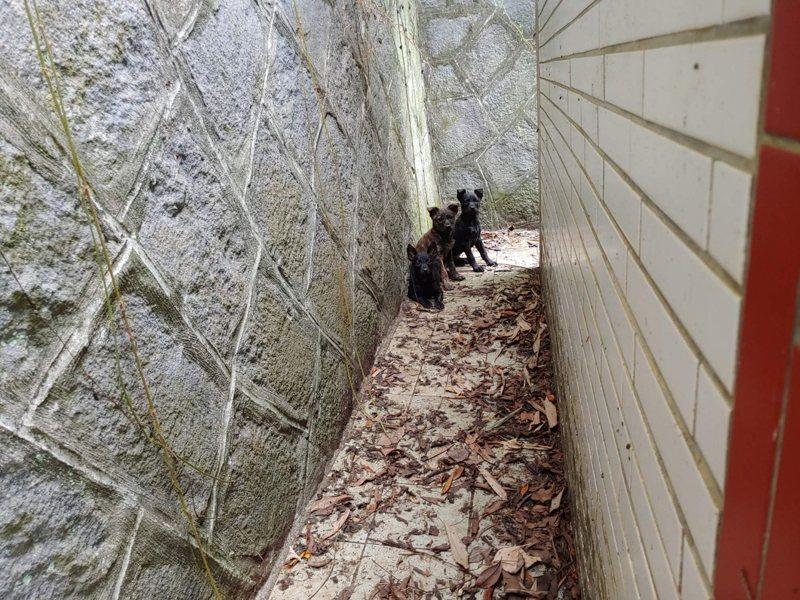 動保員黃俊翔花了1個半小時,才順利走到古墓旁,但還是成功救援瘦弱的小黑狗。圖/新北市動保處提供