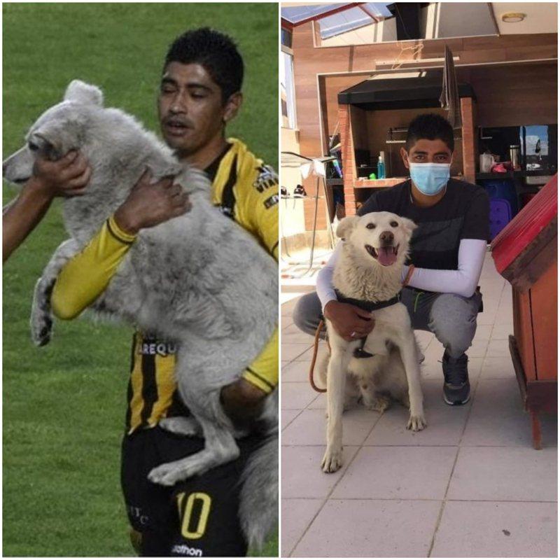 當初將狗狗抱離場的卡斯楚得知意外後,隨即從同事那打聽到收容中心,最後成功聯繫上並正式領養了狗狗。FACEBOOK/Nitro Deportivo
