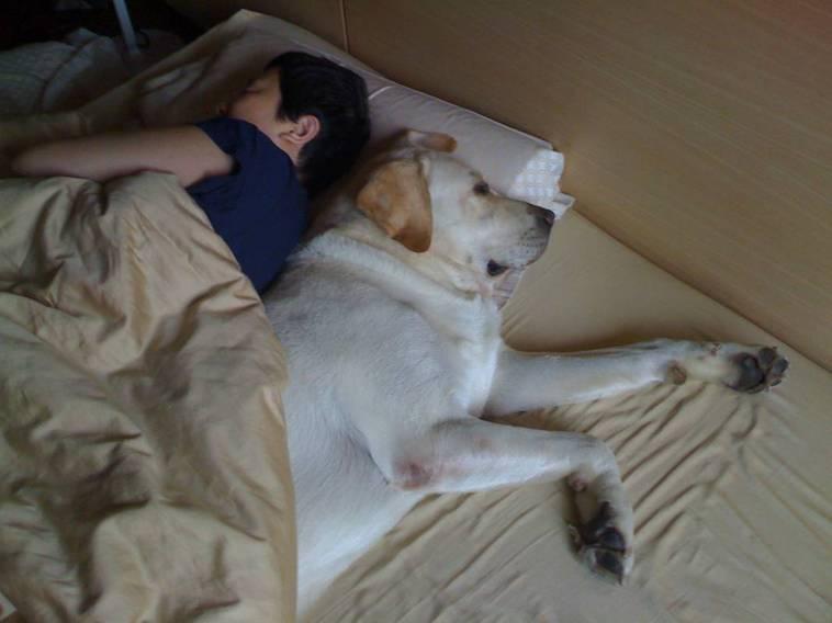 「弟弟」一路陪著余湘睡覺,直到14歲離世的前一天。(圖/余湘提供)