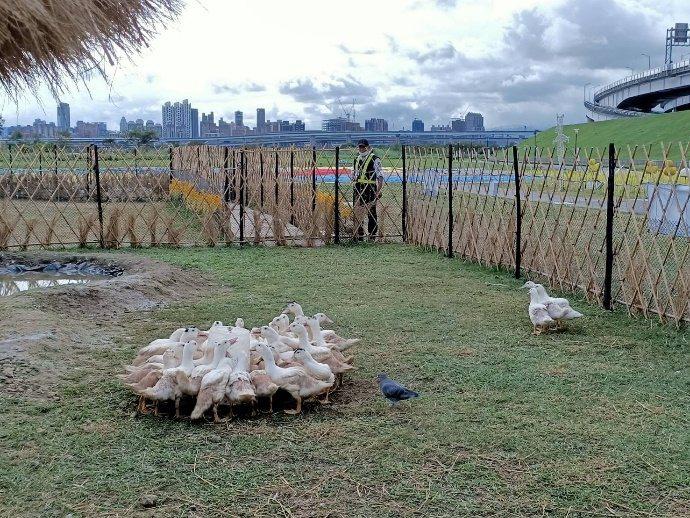 三重鴨鴨公園整合農村特色、鴨子等素材,打造「歡樂小鴨村」。圖/新北市動保處提供