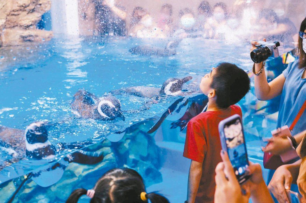 Xpark水族館在暑假開幕後,掀起青埔周邊旅遊熱潮。圖/Xpark提供