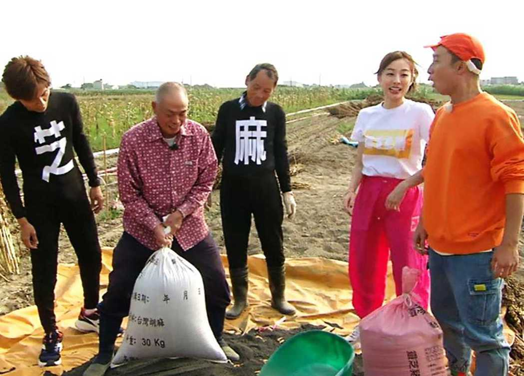 民視八大「綜藝新時代」日前到台南西港來體驗當芝麻農夫。圖/民視提供