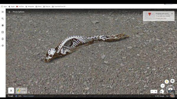 Google街景见「神秘白骨遗骸」 他放大照片曝真相