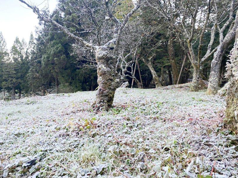 阿里山氣象站說,上午7點多出現負0.5 度低溫,溫度夠低,但水氣不足,未下雪,大地披上一層結霜後的「霜衣」。圖/蘇家弘提供
