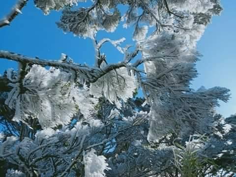 霧淞包覆屏東縣北大武山的樹木、岩石與芒草等,形成寒流低溫帶來屏東難得的景象。圖/屏東林管處提供