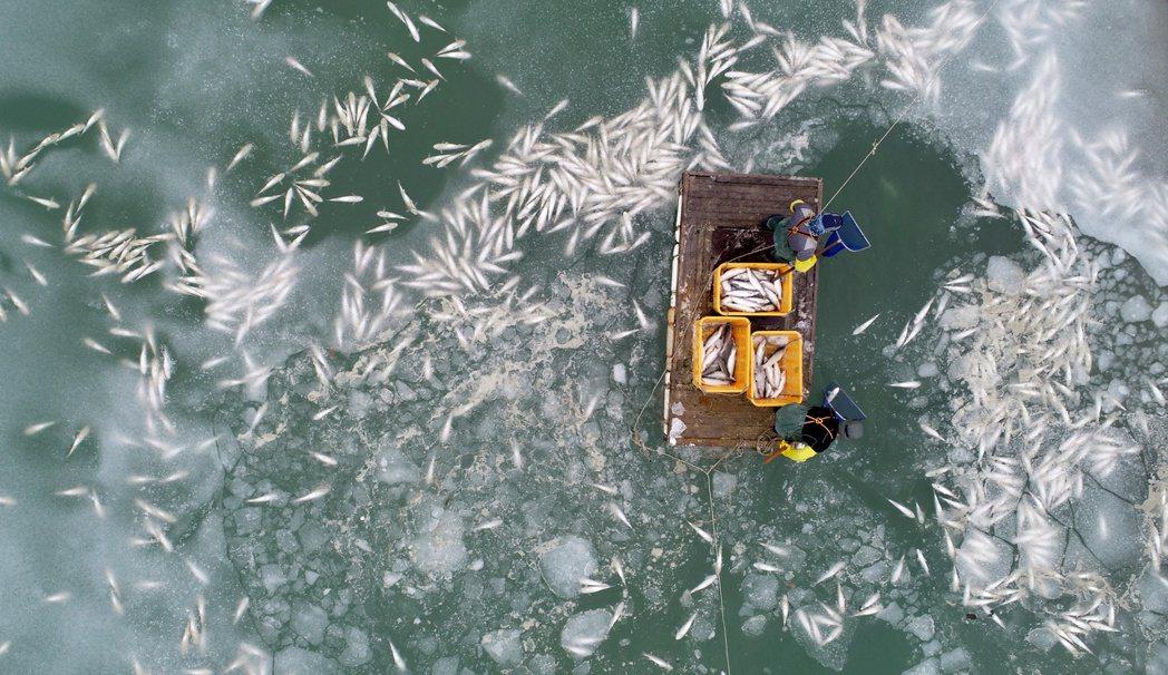 「因為河面結冰...魚都死光了!」一名從事烏魚養殖的業者向《韓聯社》表示。圖為大...