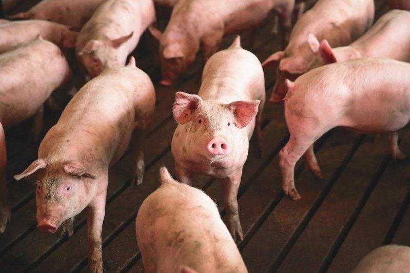 海關解釋,農委會、食藥署及海關三道關卡都已通過的豬肉數量才會於最後的「豬肉儀表板」上呈現。 法新社
