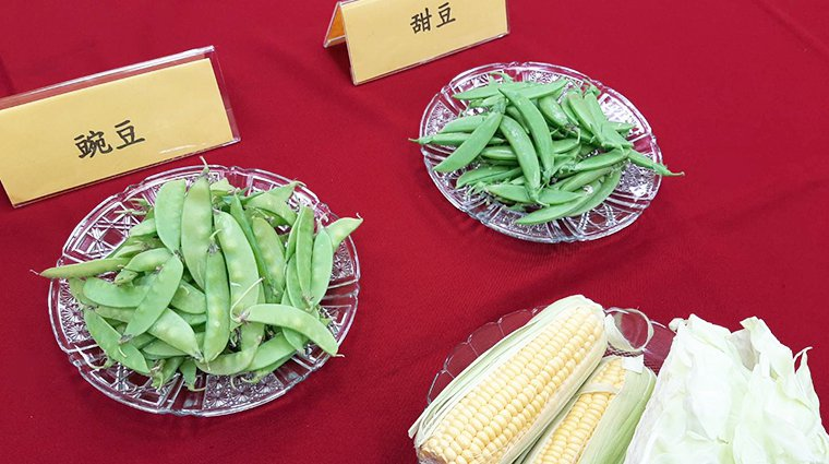 ▲消基會抽檢全台市售蔬菜,發現豆莢類出菜農藥殘留驚人,甜豆莢農藥殘留合格率0%,...