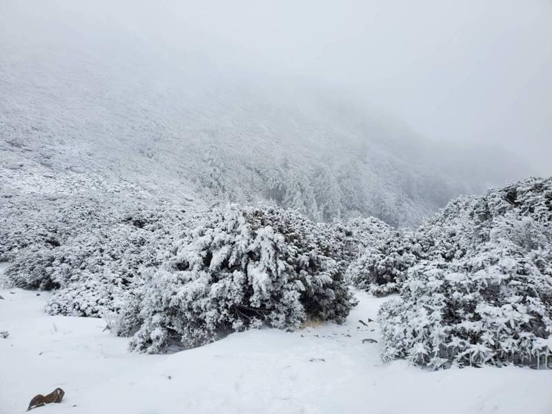 雪山連續降雪廿個小時,變成銀白世界。圖/讀者顏文男提供