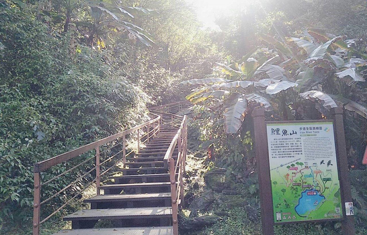 鯉魚山步道可享受森林浴、觀賞潭面景色,適合退休族、親子同遊。 圖/王思慧 攝影
