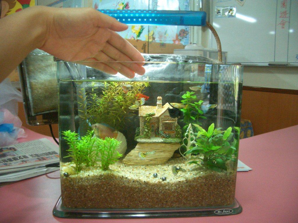 魚缸。 聯合報系資料照片/記者洪家愉攝影