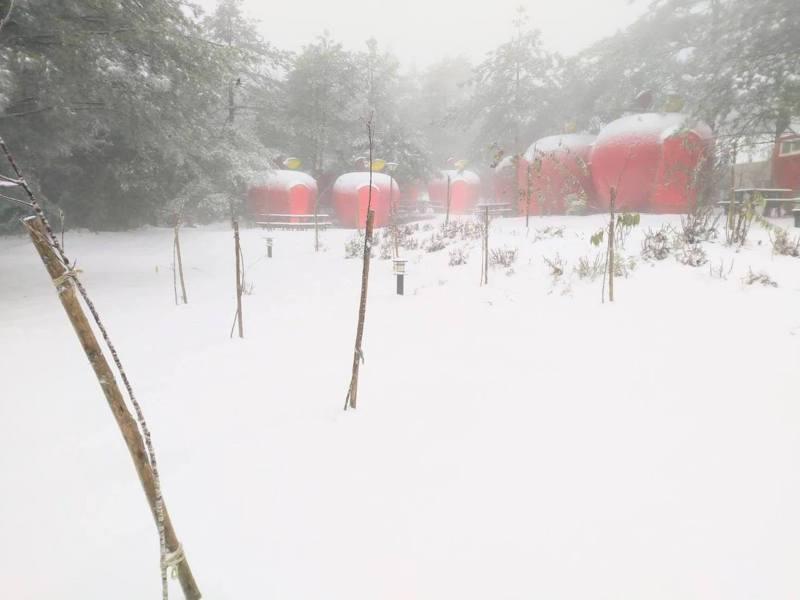 福壽山農場的露營蘋果屋上積雪,雪中紅相當美麗,彷彿走進童話世界。圖/取自福壽山農場臉書