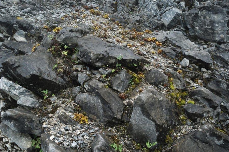 太魯閣佛甲草的棲地。  圖/林試所許天詮提供
