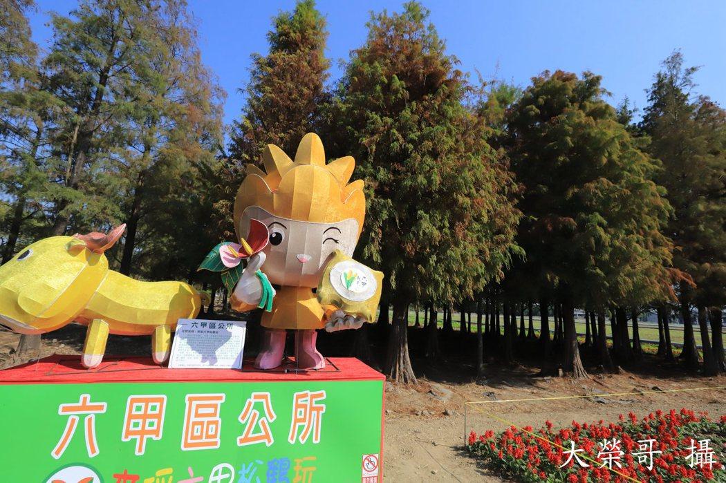 29.六甲區公所舉辦「花現落羽松、六甲松鶴玩」將在1月30日登場,現正布置花海。
