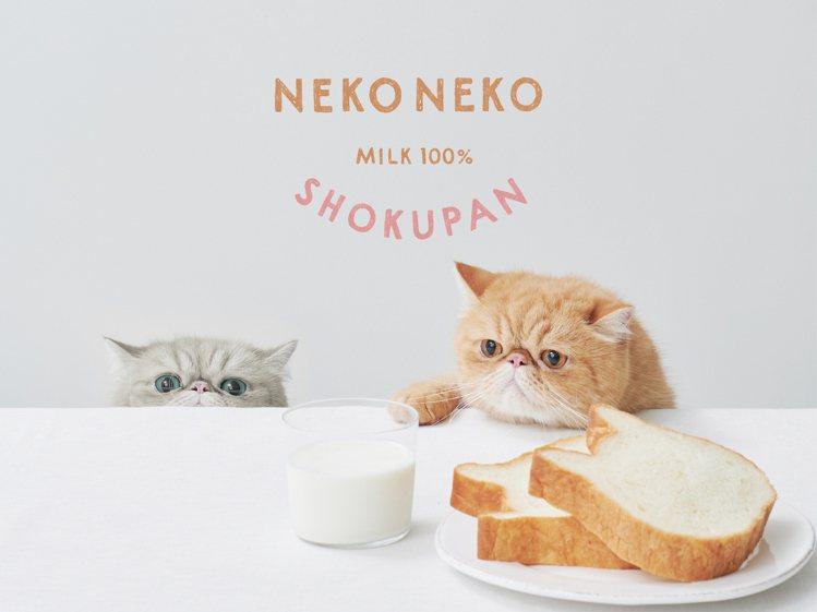 Nekoneko Shokupan貓咪吐司快閃台隆美麗華店。圖/台隆手創館提供