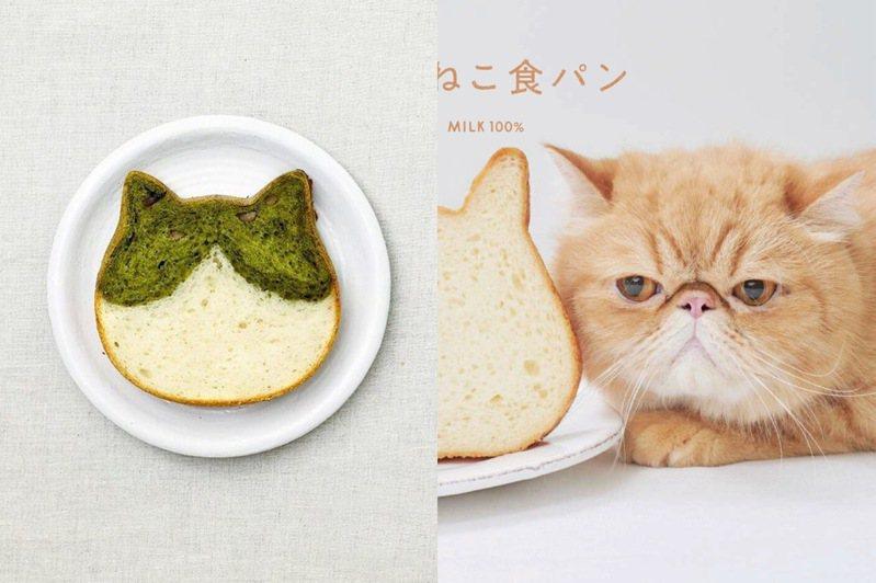 Nekoneko Shokupan貓咪吐司快閃台隆美麗華店,推出抹茶紅豆口味吐司。圖/台隆手創館提供