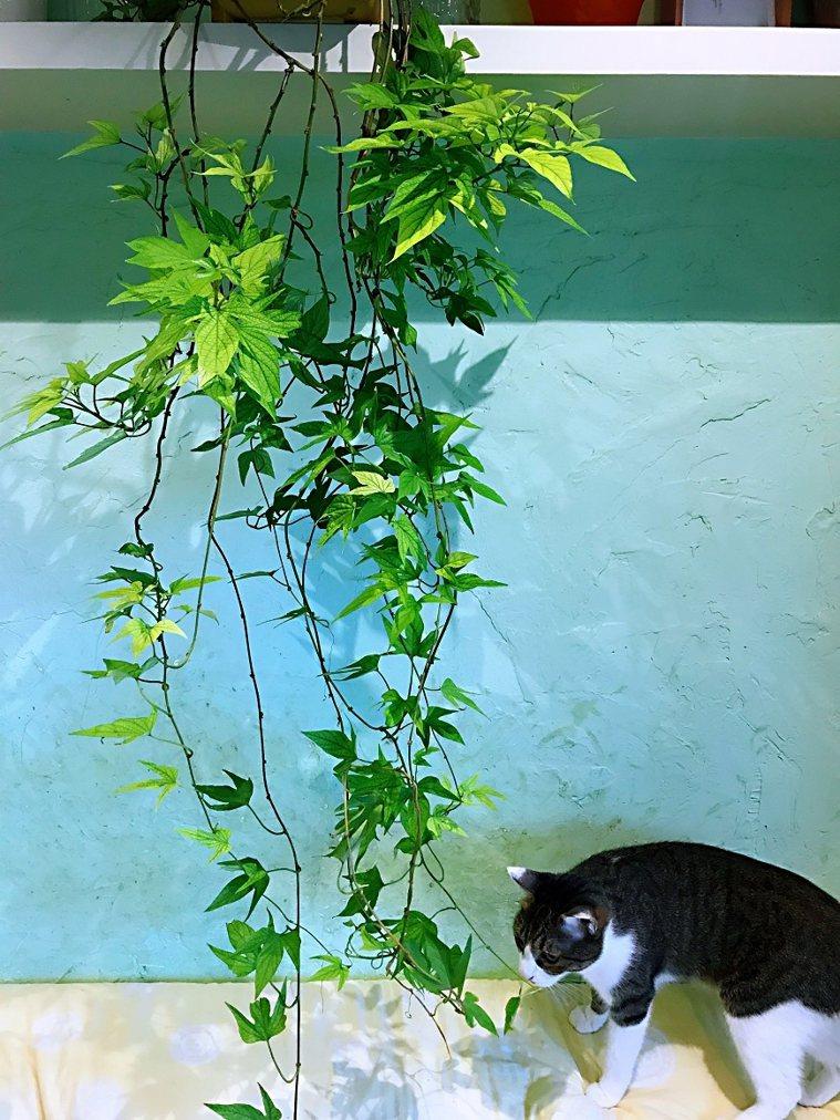在家裡放上幾盆綠色植物點綴,讓居家美化之餘,更能增加愉悅感。 圖/取自50+(F...