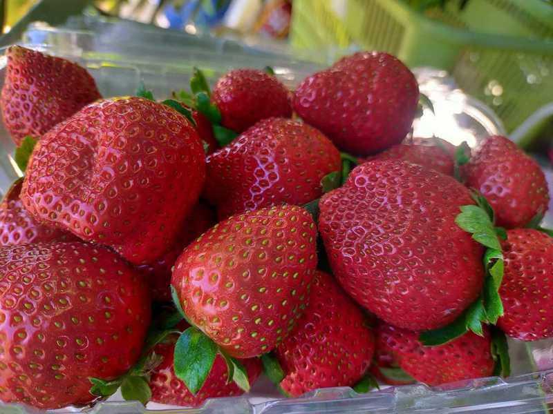 原PO以一盒草莓看清曖昧對象的為人處事。圖擷自爆怨2公社