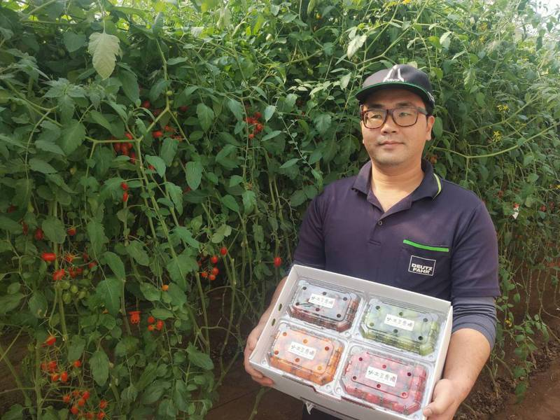 台南下營青農林煌欽從高科技工程師轉務農,推出四色小番茄禮盒很受歡迎。記者吳淑玲/翻攝