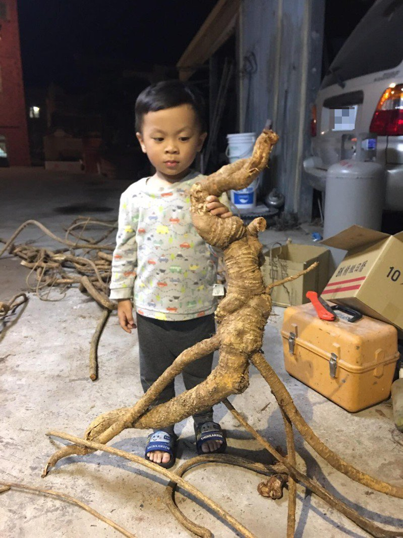 金門湖下某處古宅翻修,意外挖到一根超大隻的一條龍,跟孩童的身高差不多,身型也像樹幹一樣粗。圖/讀者提供