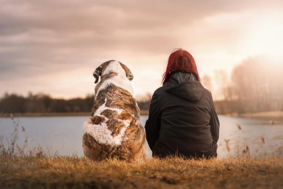 飼主死後,留下的食物飼料或飲水逐漸減少,若幸運的話,寵物還可以苟活,直到被人發現...