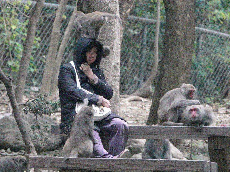 高雄柴山獼猴屢傳傷人事件,民眾到戶外登山除避免攜帶食物上山外,也要謹記不要靠近。記者劉學聖/攝影