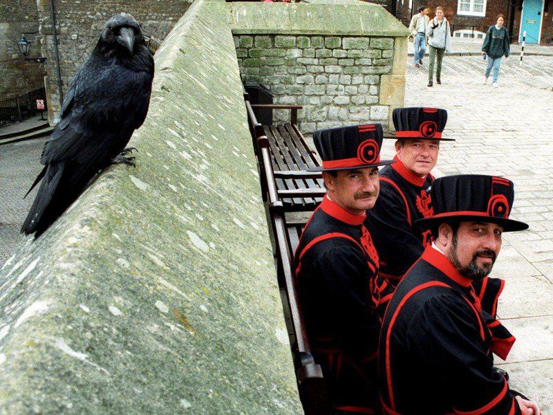 梅琳娜消失後,倫敦塔發言人強調塔內還有7隻烏鴉,比「預言」中所需的6隻還多一隻,目前也沒有補上梅琳娜空缺的計畫。路透