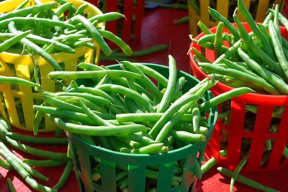 一年四季都可吃到,又稱為四季豆。 圖/pixabay
