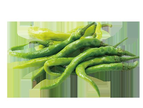 無嗆辣味的辣椒品種。 圖/張季禹 攝影