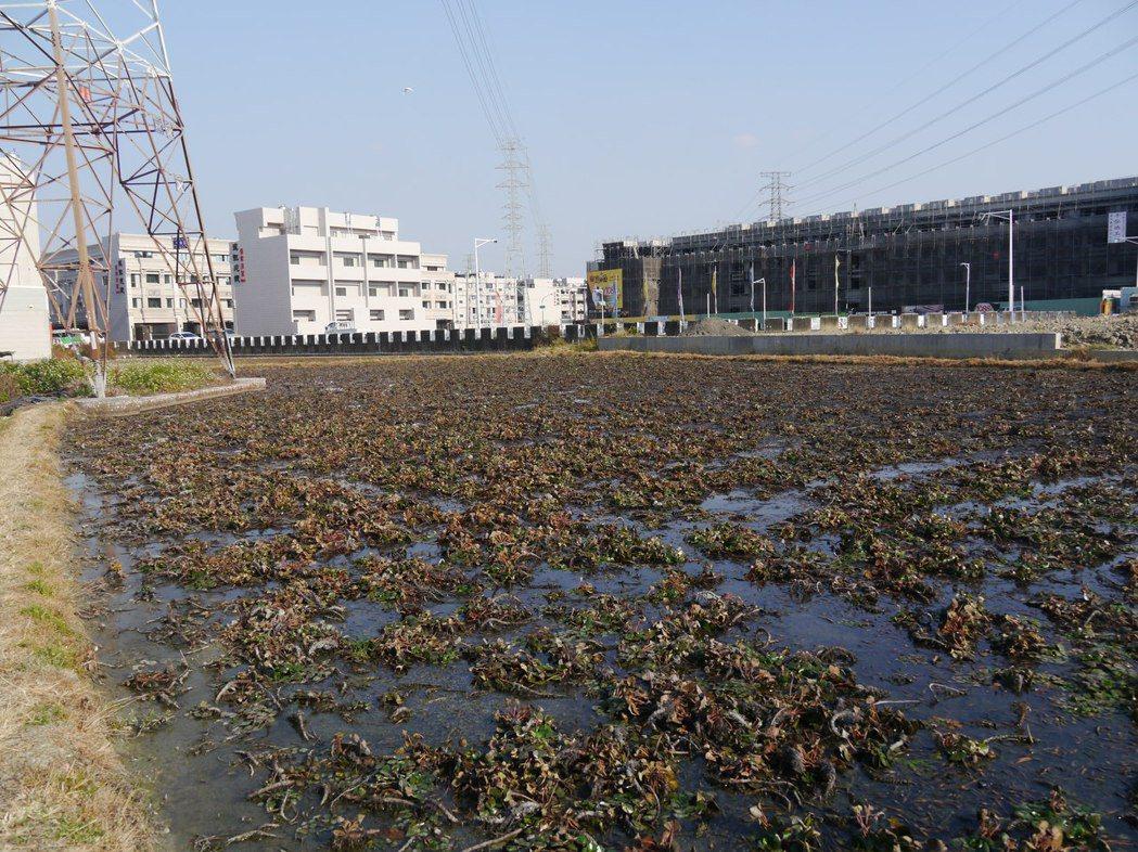 高雄市仁武區人口十年來增加兩成,九成菱角田已經蓋了房子。記者徐白櫻/攝影