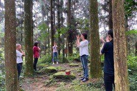 住3天「細胞活化1個月」!孟宗山莊推「森林瑜珈+台灣茶」小旅行好放鬆