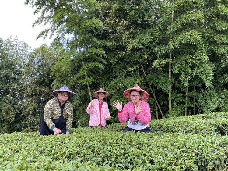 採茶、飲茶,悠閒品茗山中歲月。圖/孟宗山莊提供