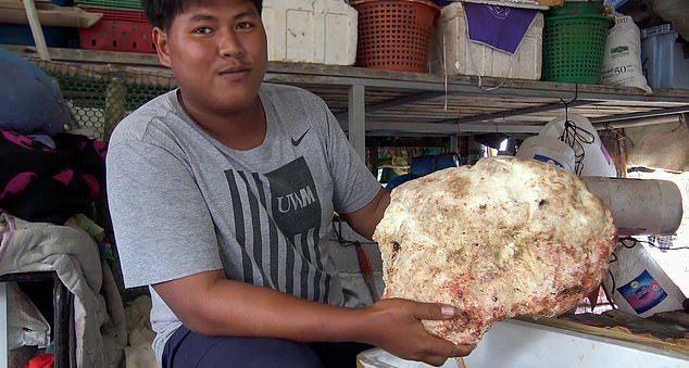 漁夫撿到一個7公斤「鯨魚嘔吐物」,市價高達210,000英鎊(約合新台幣800萬元)。圖/取自dailymail
