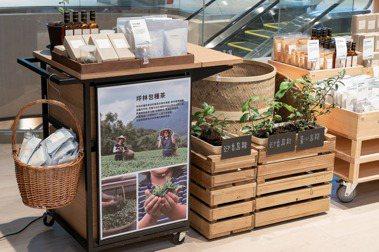 向山林、向城市:MUJI無印良品新店門市開幕,邀坪林包種茶小農進駐