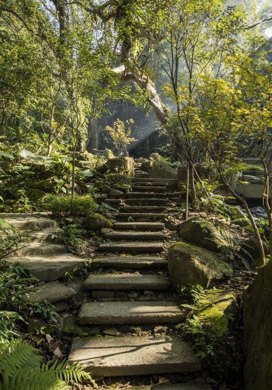 大板根森林溫泉酒店園內的森林步道。業者每日提供生態導覽。 業者/提供