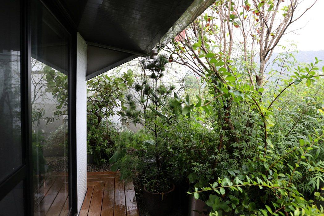 吳書原的小花園,充滿著不做作的自然平衡之美。記者林澔一/攝影