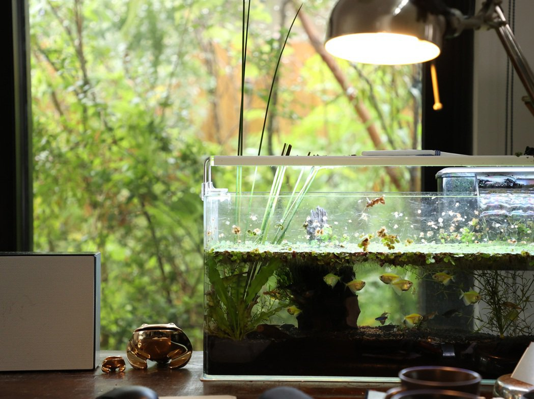景觀設計師吳書原的家,魚缸和窗外的小花園,都充滿著不做作的自然平衡之美。記者林澔...