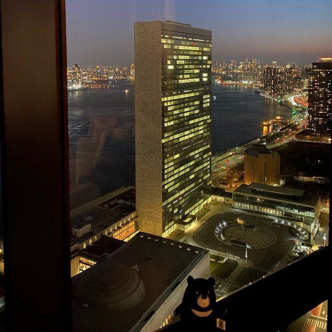 克拉夫特(Kelly Craft)在推特發文,一張照片是小黑熊坐在窗邊,背景為聯合國總部。 圖/擷取自克拉夫特(Kelly Craft)推特