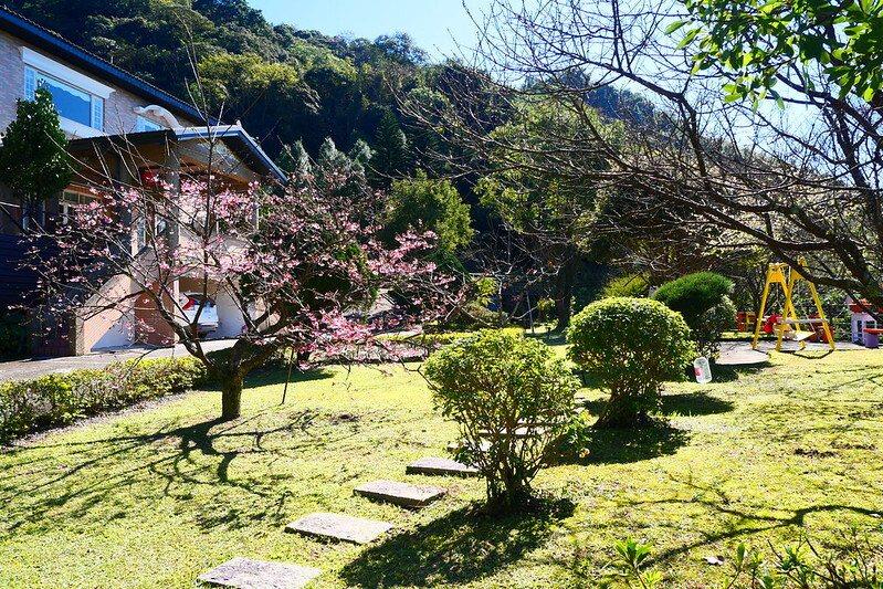 一樹成景,可以觀賞櫻花之美,同時還能夠觀賞樹枝的線條枝美。圖片左方滿是花苞的櫻花,樹枝的線條真美!