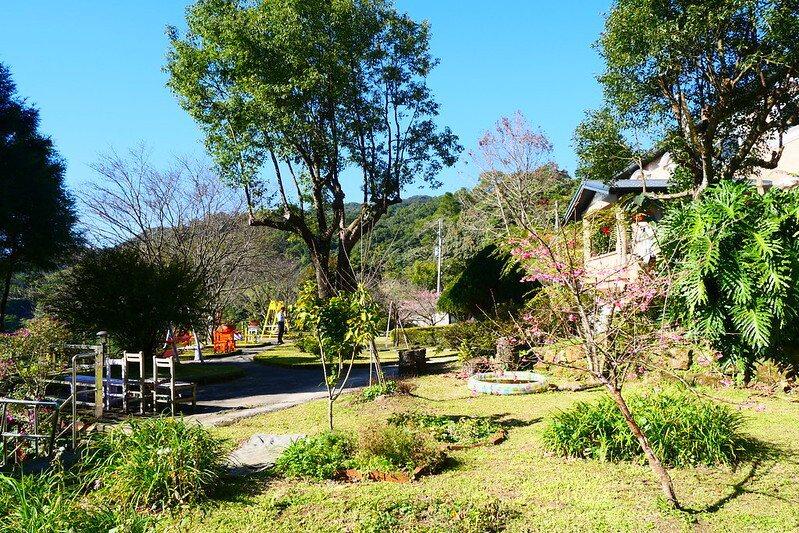 「夢想櫻花樹」:櫻王的下方花圃裡,自己長出來的一顆櫻花樹,小顆的矮種的也開了花,夢想之名係由阿桂所命名,看來「阿桂的家民宿」是一個心中懷有夢想的民宿之家。