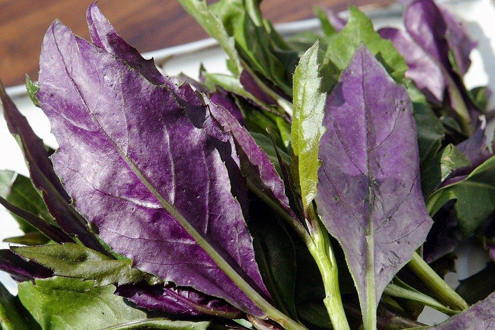 紅鳳菜的部分可以挑選比較嫩的葉子部分,菜莖可在烹調前細切成1公分大小,能助咀嚼 ...