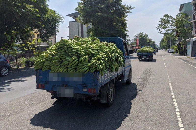 台灣目前有3888家合作社,相較於國際,數量和應用上仍有開拓空間。圖為屏東許多蕉農載香蕉交給合作社收購去化。圖/聯合報系資料照片