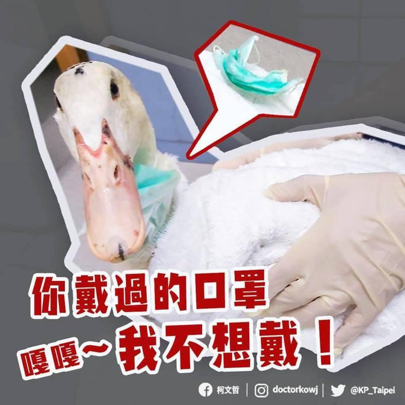 口罩成了動物殺手,台北市長柯文哲在臉書舉例,北投這隻鴨子被口罩掛繩纏住。圖/取自柯文哲臉書