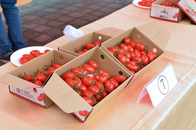 苗栗縣竹南鎮農會上午在獅山親子公園對面的竹南鎮民廣場舉辦「小蕃茄評鑑及農夫市集」推廣鎮內的優質小蕃茄。圖/苗栗縣政府提供