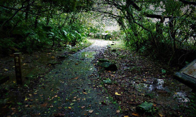 連通金瓜石到牡丹的「貂山古道」,有過去先人淘金留下無數淒美故事的痕跡。記者張哲郢/攝影