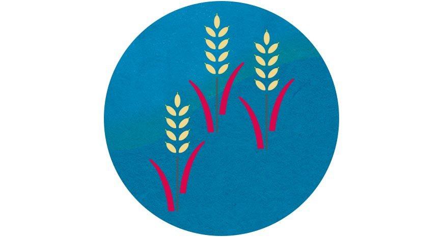 稻米為台灣閩南移民最主要的糧食與經濟來源 圖/國立臺灣博物館《2020永續年菜食...
